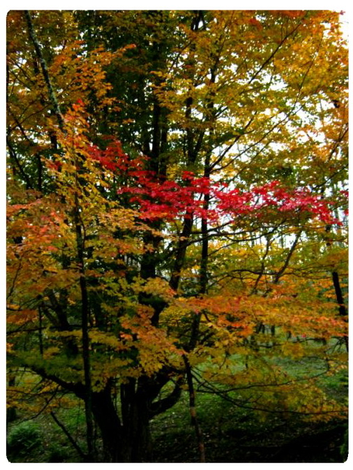 عکس ارسالی کاربران: درخت آبرنگ