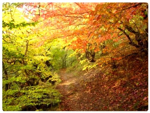عکس ،ارسالی ، کاربران ، سایت ، رسمی ، مجید ، اخشابی ، پاییز ، پائیز ، جنگلuser ، submissions ، photo ، www.majidakhshabi.com ، majid ، akhshabi ، official، website ،fall ، jungle، ،autumn ،