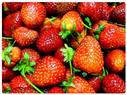 عکس ،ارسالی ، کاربران ، سایت ، رسمی ، مجید ، اخشابی ، طبیعت ، میوه ، توت فرنگی ، شیرین ،user ،submissions ، photo ، www.majidakhshabi.com ، majid ، akhshabi ، official nature ،Strawberry، fruit ، Sour ، ، website ، sweet