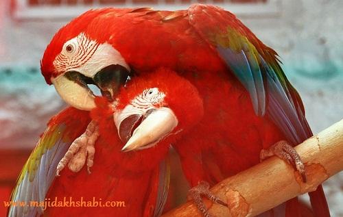 باغ پرندگان اصفهان www.majidakhshabi.com