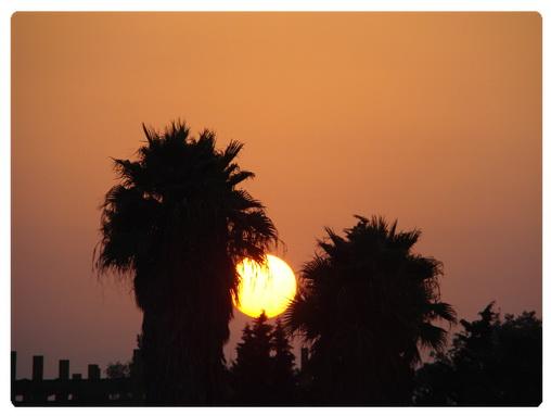 عکس ارسالی کاربران سایت رسمی مجید اخشابی www.majidakhshabi.com دریا غروب خورشید نخل