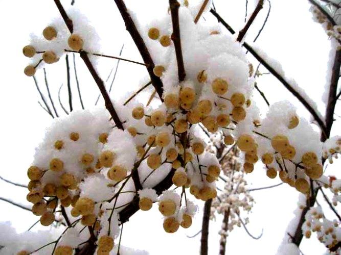 عکس ارسالی کاربران سایت رسمی مجید اخشابی زمستان میوه های برفی