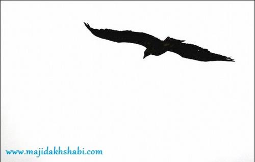 عکس جالب جاذبه هاي جهان ايران شناسي معرفي ديدني ها طبيعت زیبا تالاب بین المللی گمیشان ایران آسیا سایت رسمی مجید اخشابی Photo Fun Golestan Province Iran Asia Majidakhshabi Official Site