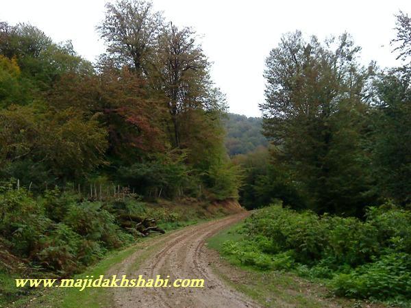 جاده زيباي جنگل