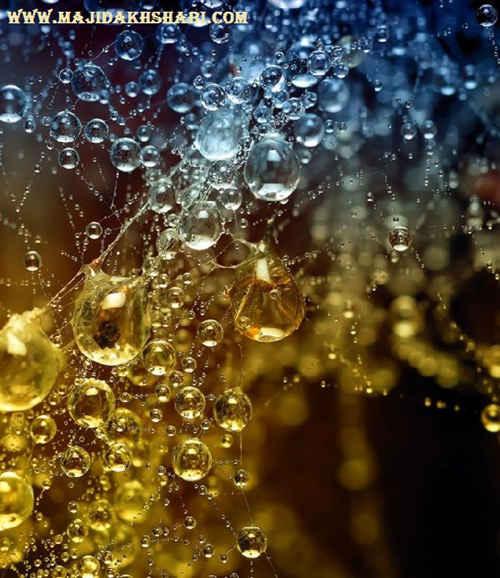 چند تصویر زیبا از قطرات شبنم