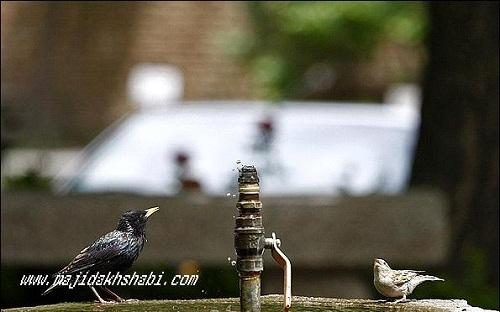 هنر عکاسي: لحظات شکار عکاس از بازی پرندگان