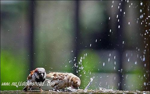 لحظات شکار عکاس از بازی پرندگان