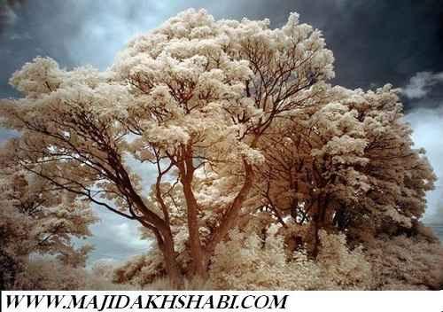 تصاویری از تکنیک مادون قرمز در عکاسی
