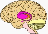 موسیقی از دید نوروساینس (علم عصب شناسی)