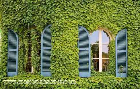 تصویر نمای پوشیده از برگ یک منزل در خیابان برسی در منطقه ۱۲ پاریس