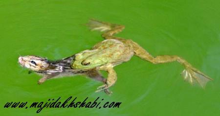 خالق موجود مهربان سایت رسمی مجید اخشابی