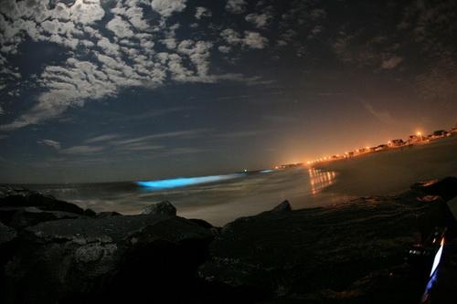 موجودات عجیب و نورانی اعماق اقیانوس
