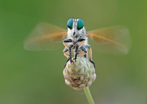عکسهای زیبا از حشرات