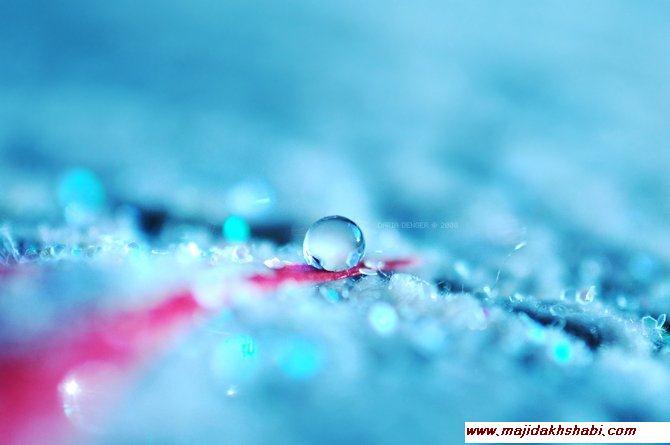 قطرات شبنم در طبیعت