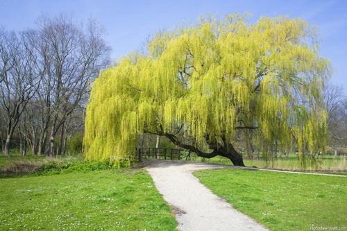هنر عکاسی: درختان