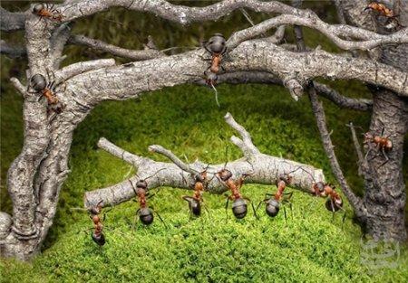 هنر عکاسی: تصاویر بامزه از شهر مورچه ها