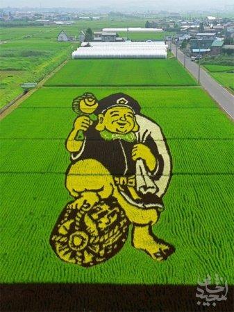 هنر عکاسی: هنر کاشتن برنج در ژاپن